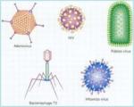 Viruses #1